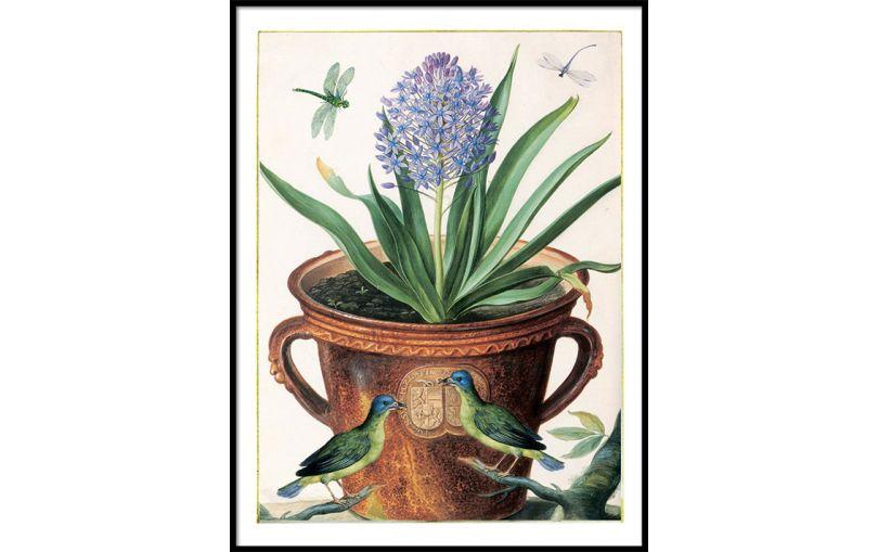 Ilustracja Hiacynt - Kolekcja Werandy