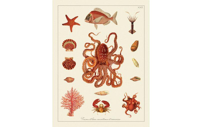 Ilustracja kompozycja morska - styl Hampton - Kolekcja Werandy